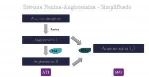 regina-angiotensina-simplificado-300x155 Qual a relação do Whey protein hidrolisado, Lactocinina e o coronavírus ?